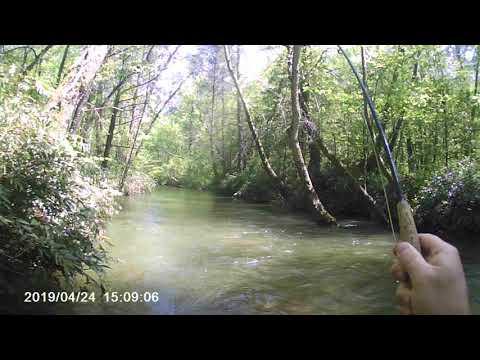 Fly Fishing On Dukes Creek, Big Daddy Trout Straightened My Hook