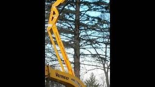 Bucket truck tree removal Livonia Michigan