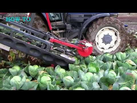 How To Start Cabbage Farming | How To Machines