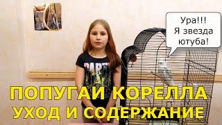 Попугаи Корелла - уход и содержание