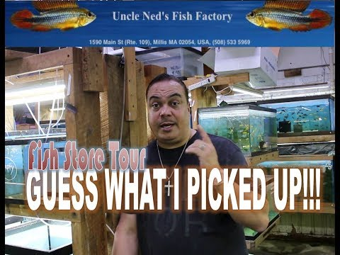 A Massive Fish Store Tour- Uncle Ned's Fish Factory