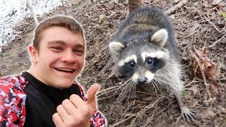 KENTUCKY RACCOON *Catch Clean Cook*