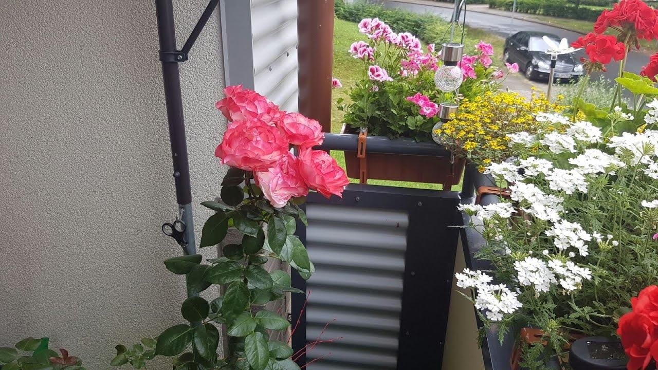 Любителям цветов цветы на балконе и на окне гроза hcdin.ru.
