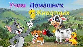 ДОМАШНИЕ ЖИВОТНЫЕ. Развивающий мультфильм для детей