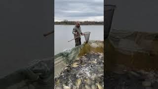 Платная рыбалка пруд Черноморец 01 05 21 Запуск карпа