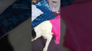 Dog dress up 😂