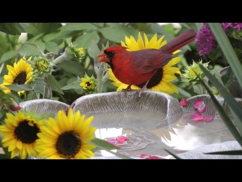 Charlie Parker  Bird Symbols