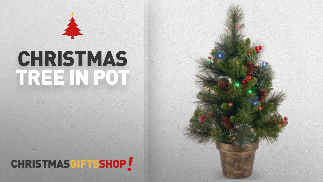 Most Popular Christmas Tree In Pot: National Tree 2 Foot