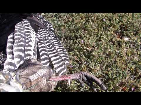 Spring Turkey Hunt With Oak Stone Outfitters