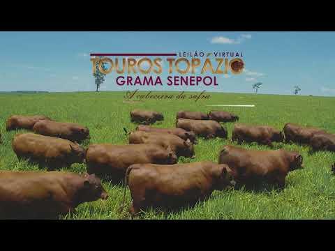 Convite Leilão Touros Topázio Grama Senepol 10/08