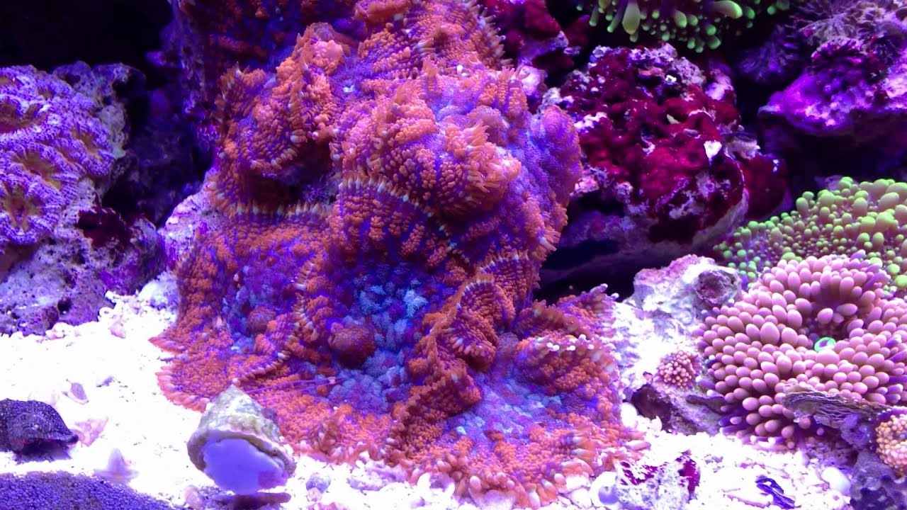 reefs day debacle - photo #40