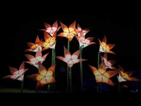 RHS Garden Wisley lights up for Christmas