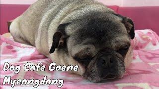 Dog Cafe Gaene in Myeongdong Seoul