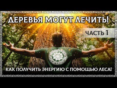 ДЕРЕВЬЯ — ИСТОЧНИК СИЛЫ! 🙏 Как получить энергию от дерева через медитацию! ЧАСТЬ 1 (древо, веды)