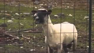Skrillex ft. The Goat - First of the year Goat