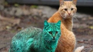 Who Needs Photoshop When This Green Cat Is Completely REAL Whoa