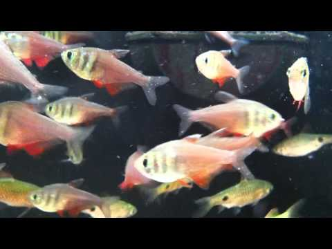 Fish relaxation scene real live fish swimming to thier for Fish swimming video