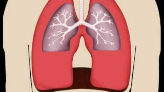 Lungs in Motion - Pulmonary Fibrosis