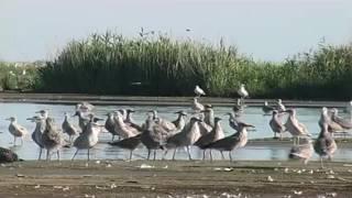 видео Перлина України: Карпатський біосферний заповідник