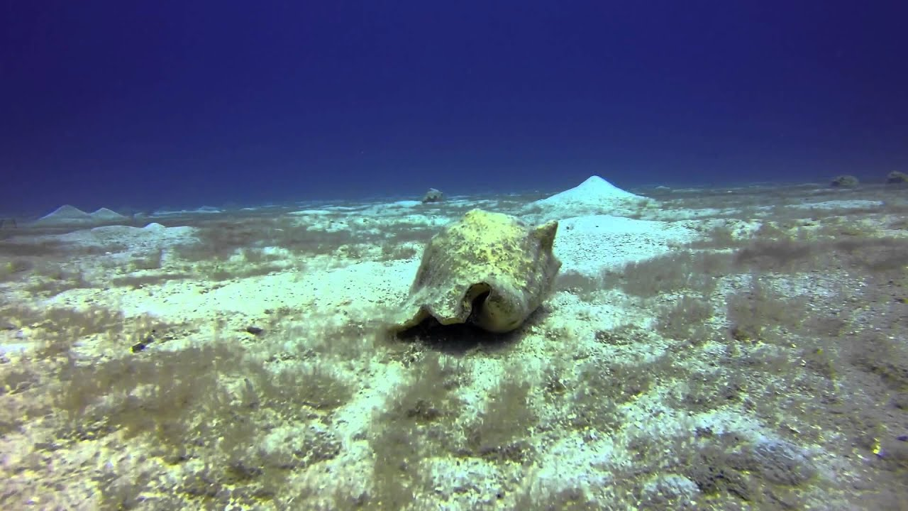 Eden Rock Cayman Islands Youtube