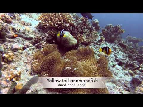 Maldives wildlife Nov 2015
