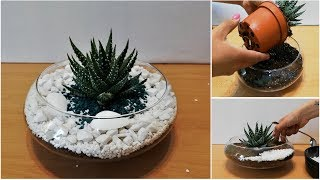 How to Repot  and Decorate Zebra Succulent /  Haworthia