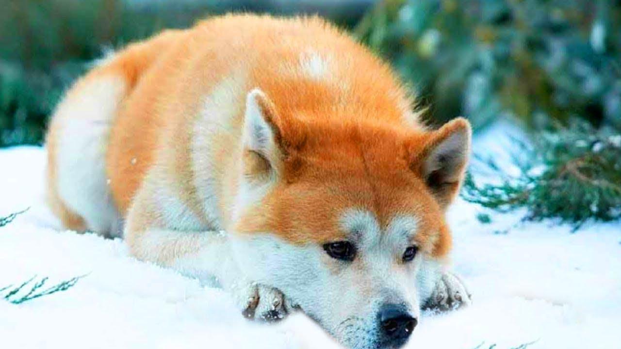 كانت هذه الكلبة مربوطة بشجرة في الغابة من أجل التخلص منها ، ولكن ما حدث بعد ذلك كان معجزة حقيقية