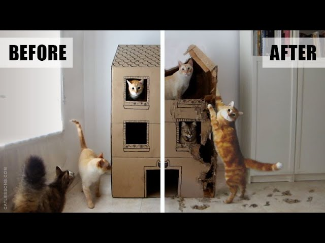 A Year in the Life of a Cat Cardboard House