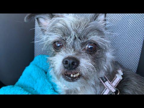 groom-my-dogs-face-myself---live-texas