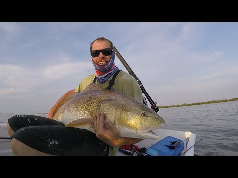 GIANT 60lb Redfish In The Mosquito Lagoon