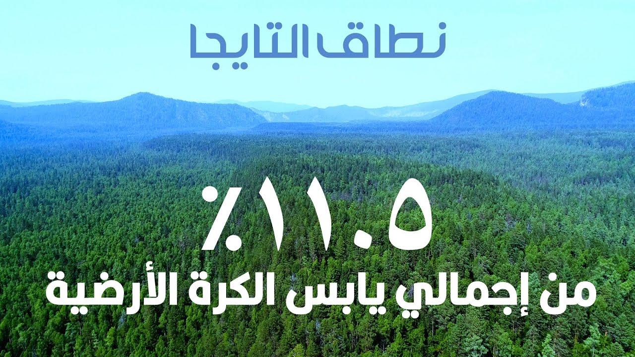 شاهد أكبر غابة على وجه الأرض