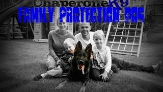 Chaperone K9: Family Protection Dog