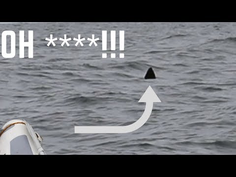 GREAT WHITE SHARK Encounter On Inflatable Boat (WARNING: STRONG LANGUAGE)