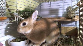 月うさぎアスカ先輩Rabbit in the Moon live stream on Youtube.com