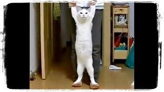 Смешные Коты и Кошки 2019, Приколы про Котов до СЛЕЗ | Funny Cats #613
