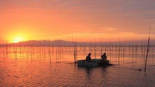 日本一の海苔生産地有明海 福岡県南部にある柳川市は有明海に面しており...