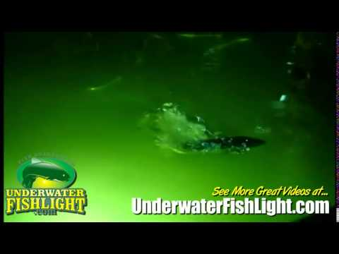 spotted sea trout feeding at the surface around dock light - youtube, Reel Combo