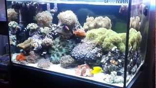 Aquario marino 240litri 932013