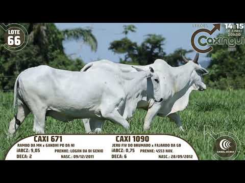 LOTE 66   CAXI 671, CAXI 1090