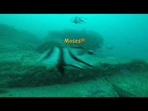 Mooloolaba - Big Cod, Coral Trout And Red Emperor In Close