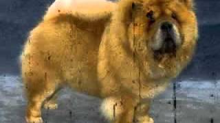 Top Ten 10 Most Dangerous Dog Breeds