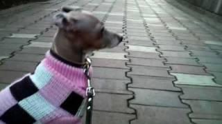 散歩は寒いけど楽しいね.