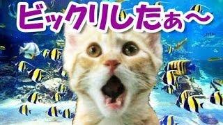 猫のちょっと驚いた表情です。