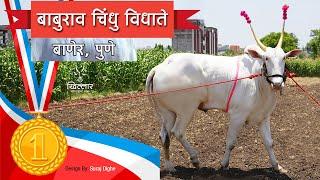 Khillar Maharashtrachi Shaan | बाबुराव चिंधू विधाते | Khillar | Pune | 2019 | Trailer