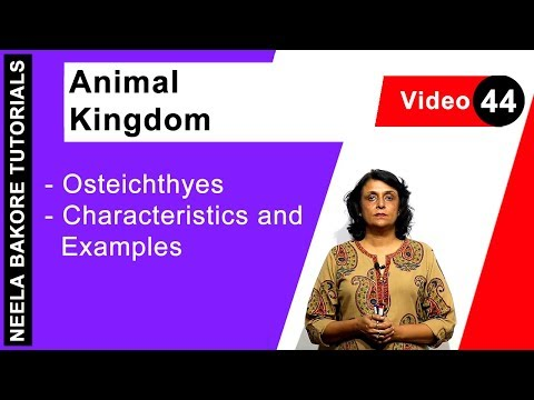 Biology For NEET & AIIMS | Animal Kingdom - Osteichthyes - Characteristics And Examples