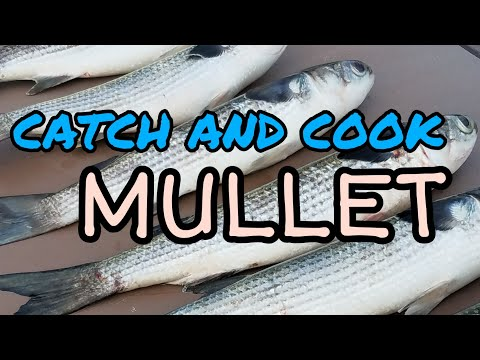 How To Cook Mullet: Two Recipes