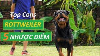 TOP 5 Nhược điểm chó Rottẁeiler Biggest Cons