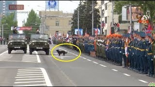 Эксклюзив! Собака сорвала парад 9 мая в Донецке 2018
