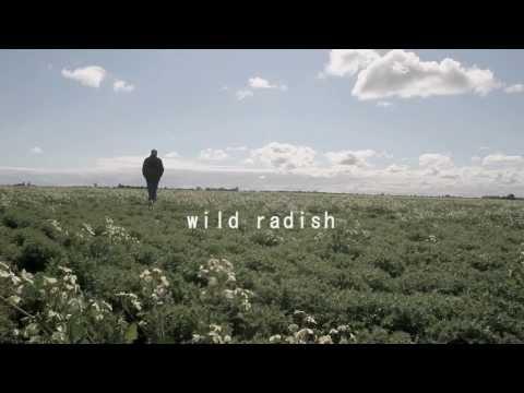 The Wild Radish Song