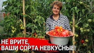 Не врите, ваши сорта не вкусные!   Как вырастить сладкие томаты